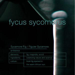 Zenology Fycus Sycomorus Home Fragrance notes